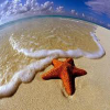 Starfish find numbers