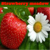 Strawberry meadow