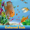 Colored fish 5 Difference…