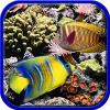 Coral reefs. Hidden objec…