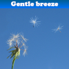 Gentle breeze 5 Differenc…