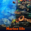 Marine life. Find objects