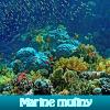 Marine mutiny