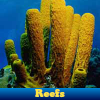 Reefs 5 Differences