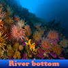 River bottom 5 Difference…