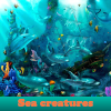 Sea ​​creatures. Find…